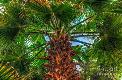 Photograph - Waghingtonia Palm Tree by Dale Powell