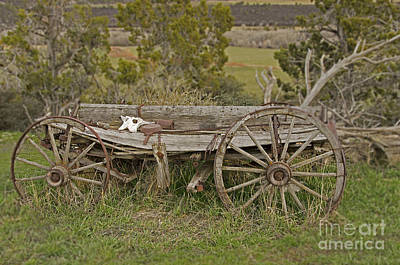 Photograph - Wagon Head by Kelly Black