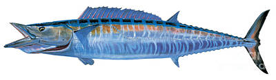 Striped Marlin Painting - Wahoo by Carey Chen