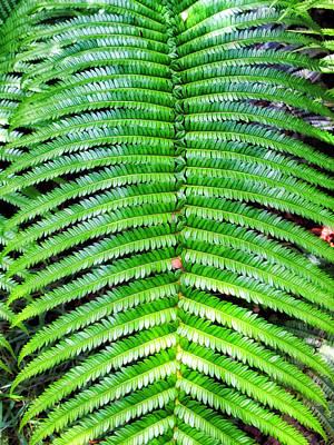 Photograph - Waikamoi 31 by Dawn Eshelman