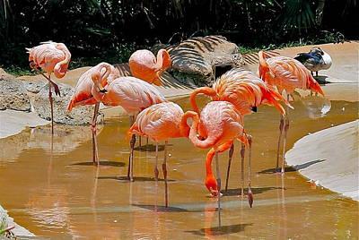 Photograph - Waikiki Flamingos by Michele Myers