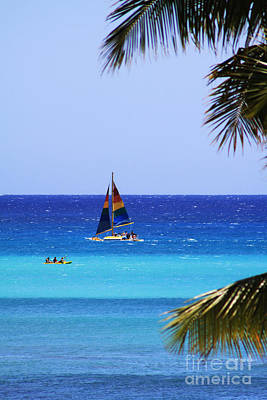 Photograph - Waikiki Sailboat by Alyce Taylor