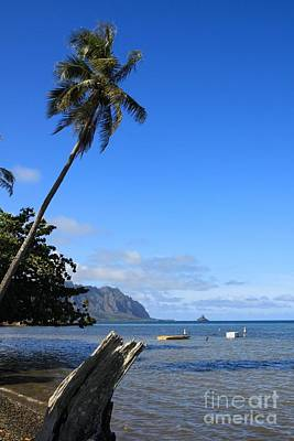 Whats Your Sign - Waimanalo Beach  by DJ Florek