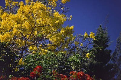 Photograph - Waimea's Gold by Morris  McClung