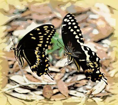 Photograph - Wait For Me Butterfly 1 by Sheri McLeroy