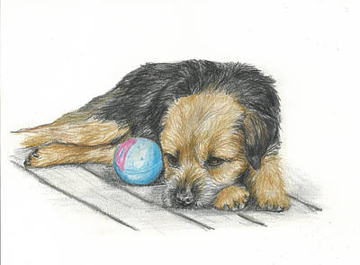 Puppy Drawing - Waiting by Daniele Trottier