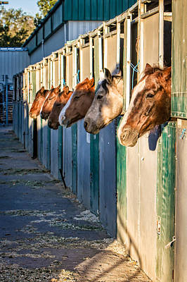 Forelock Photograph - Waiting For Breakfast by JoJo Photography