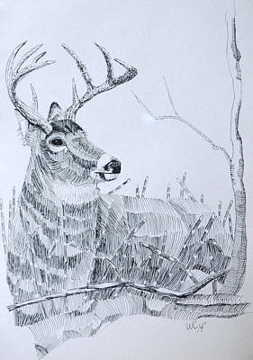Drawing - Waiting For Dusk by Wade Clark