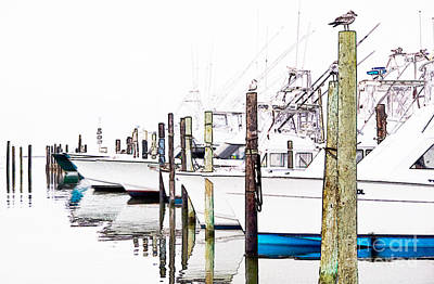 Oregon Inlet Photograph - Waiting For Food - Outer Banks by Dan Carmichael
