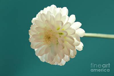White Flower Photograph - Waiting For Love by Krissy Katsimbras