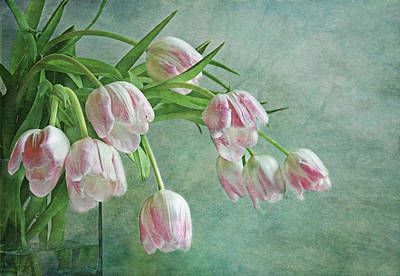 Waiting For Spring Art Print by Claudia Moeckel
