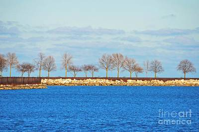 Waiting For Summer - Trees At The Edge Art Print by Mary Machare