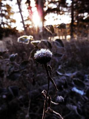 Winter Photograph - Waiting For Sunshine by Zinvolle Art