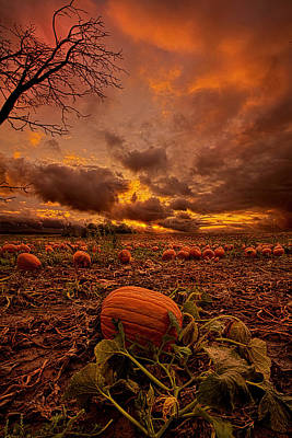 Pumpkin Patch Photograph - Waiting For The Great Pumpkin by Phil Koch
