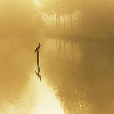 Yellow Bird Wall Art - Photograph - Waiting For The Sun .......... by Piet Haaksma