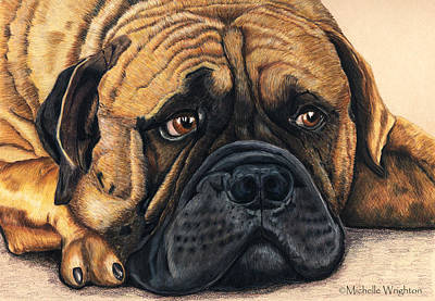 Dog Art Painting - Waiting Bullmastiff Drawing by Michelle Wrighton