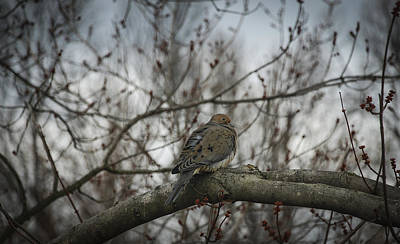 Art Print featuring the photograph Waiting On Spring by Phil Abrams