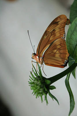 Butterfly Waiting On The Wind  Art Print