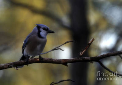 Photograph - Waiting Patiently by Amanda Collins