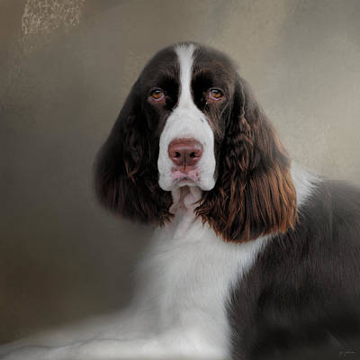 Waiting Patiently - English Springer Spaniel Art Print