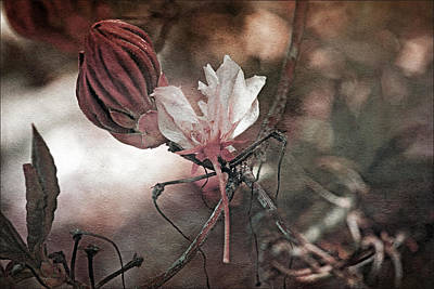 Outlook Photograph - Waiting To Blossom by Bonnie Bruno