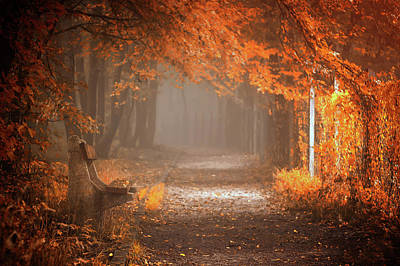 Benches Photograph - Waiting To Fall by Ildiko Neer