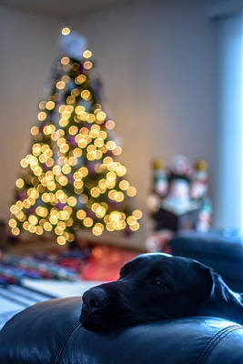 Photograph - Wake Me Up When Santa Gets Here by Randy Scherkenbach