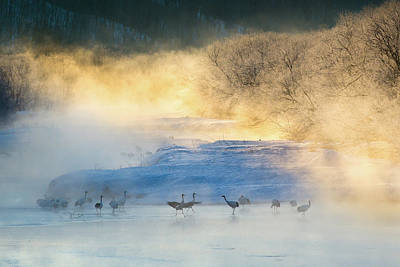 Cranes Photograph - Wake-up Dance by C. Mei