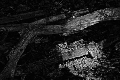 Forest Floor Photograph - Waking The Dead by Odd Jeppesen