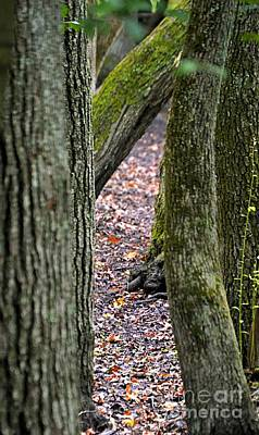 Photograph - Walk Among The Trees by Sharon Woerner
