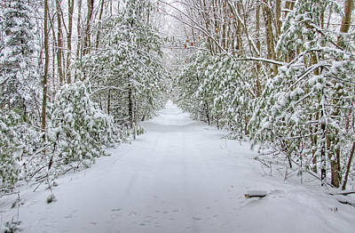 Forest Photograph - Walk In Snowy Woods by Donna Doherty