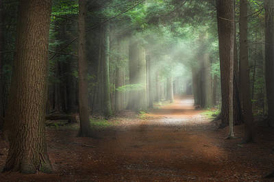 Shadows And Light Photograph - Walk In The Woods by Bill Wakeley