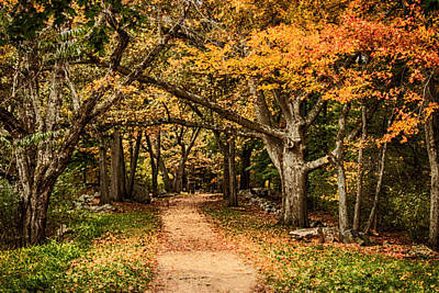 Autumn Photograph - Walk In The Woods by Jeff Folger