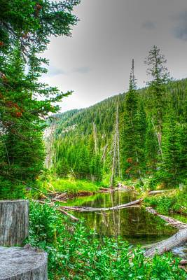 Art Print featuring the photograph Walk In The Woods by Kevin Bone