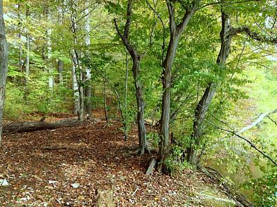 Photograph - Walk In Woods by Jeanne Donnelly
