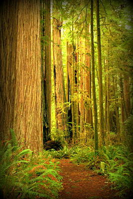 Photograph - Walk Thru The Redwoods by Cindy Wright