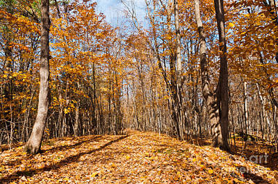Fall Leaves Photograph - Walk With Me by Cheryl Baxter