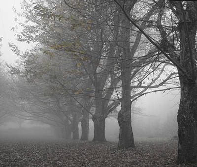 Winter And Autumn Landscape Photograph - Walk With Me - Chestnut Trees In Fog by Georgia Fowler