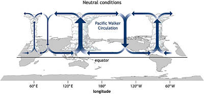 Info Graphic Photograph - Walker Circulation by Science Source