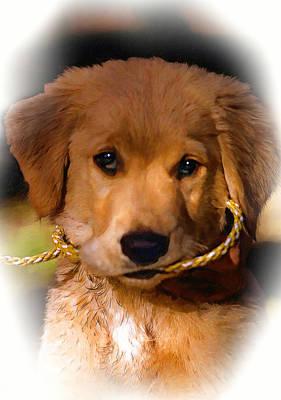 Puppies Digital Art - Walkies...pleeease Oil by Steve Harrington