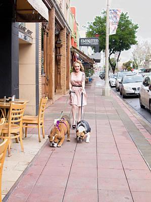Bullie Photograph - Walking Adorabulls by Beth Wickham