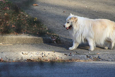Photograph - Walking Dog by Michele Wilson