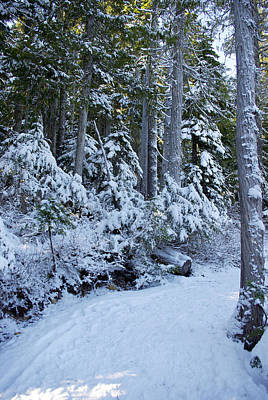 Photograph - Walking In A Winter Wonderland by Marilyn Wilson
