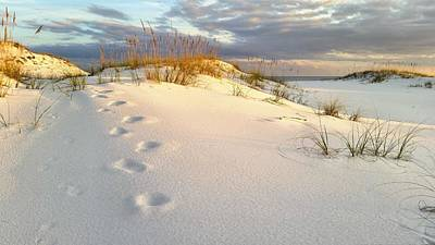 Walking In Destin Art Print