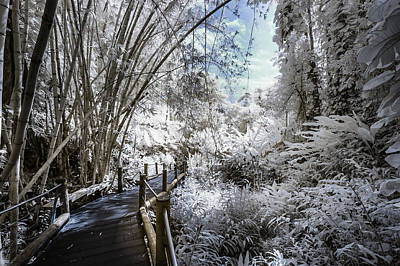 Photograph - Walking Into The Infrared Jungle 2 by Jason Chu