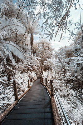 Photograph - Walking Into The Infrared Jungle 3 by Jason Chu