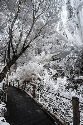 Photograph - Walking Into The Infrared Jungle 4 by Jason Chu