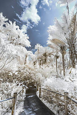Photograph - Walking Into The Infrared Jungle 5 by Jason Chu