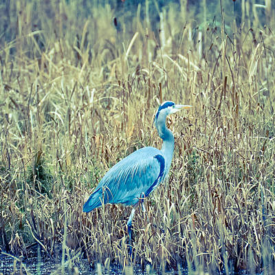 Photograph - Walking Into The Reeds by Ronda Broatch
