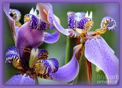 Unique Flowers Photograph - Walking Iris Dream by Carol Groenen